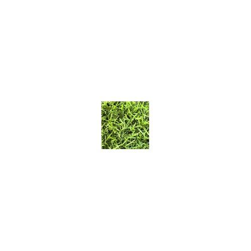 供应吉林绿化草坪