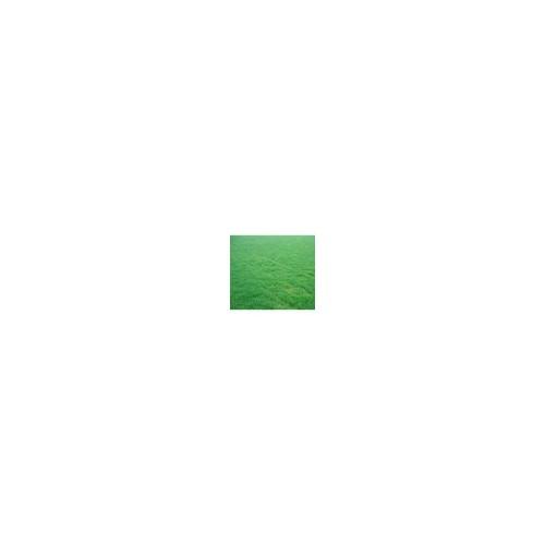 供应黑龙江绿化草坪