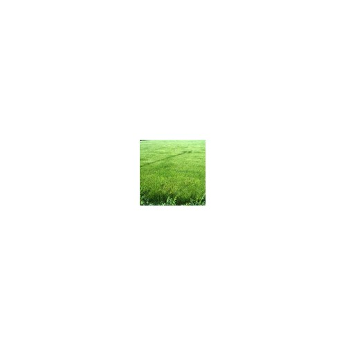 铁岭温水泉草坪