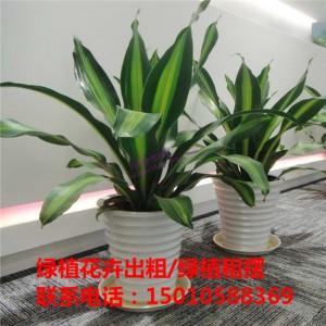 北京办公室绿植花卉租赁 北京商场绿植花卉租赁