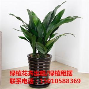北京办公室绿植花卉租摆 北京商场绿植花卉租摆