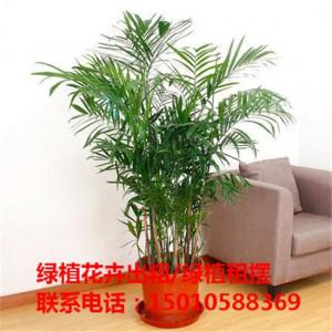 北京商场绿植花卉租摆 北京办公室绿植花卉租摆