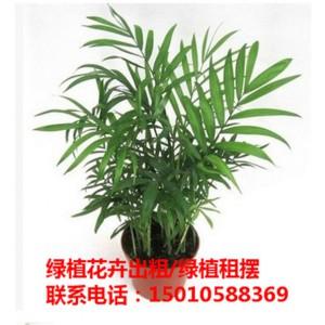 北京写字楼绿植花卉租摆 北京办公室绿植花卉租摆