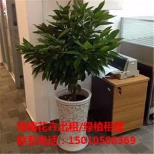 北京酒店绿植花卉租赁 北京商场绿植花卉租赁