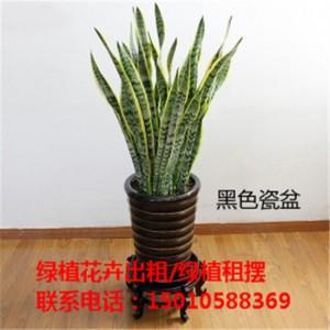 北京医院绿植花卉租赁 北京写字楼绿植花卉租赁