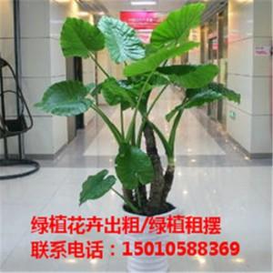 北京银行绿植花卉租赁 北京医院绿植花卉租赁