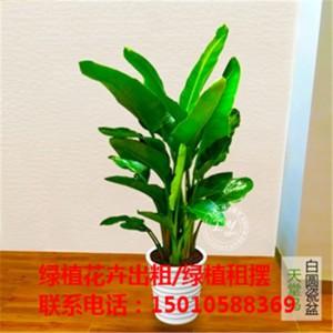 北京医院绿植花卉租摆 北京办公室绿植花卉租摆