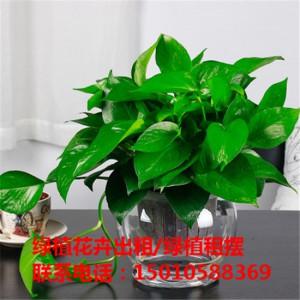北京水培花卉绿植租赁公司 北京水培花卉绿植租赁供应商