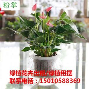北京水培花卉绿植租赁供应商 北京水培花卉绿植租赁公司