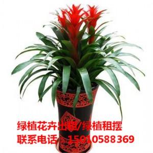 北京大型花卉绿植租摆公司 北京大型花卉绿植租摆供应商