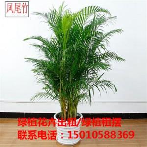 北京大型花卉绿植租摆供应商 北京大型花卉绿植租摆公司