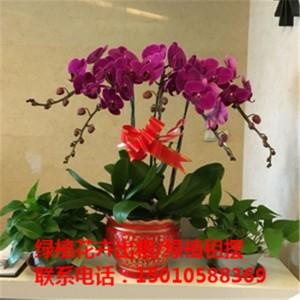 北京中型花卉绿植租摆公司 北京中型花卉绿植租摆供应商