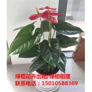 北京中型花卉绿植租摆供应商 北京中型花卉绿植租摆公司