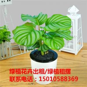 北京小型花卉绿植租摆公司 北京小型花卉绿植租摆供应商