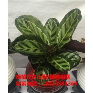 北京小型花卉绿植租摆供应商 北京小型花卉绿植租摆公司