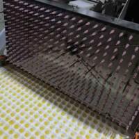 穴盘播种机  西瓜南瓜穴盘播种机--常州风雷精机