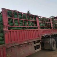 山东菏泽麦冬苗大量低价出售 山东韩豪麦冬草合作社
