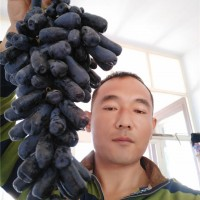 葫芦岛甜蜜蓝宝石葡萄苗供应价格