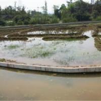 葫芦岛淡水小龙虾种苗供应价格 葫芦岛淡水小龙虾种苗繁育基地