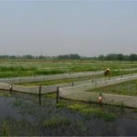 葫芦岛小龙虾青红种苗繁育基地 葫芦岛小龙虾青红种苗供应价格