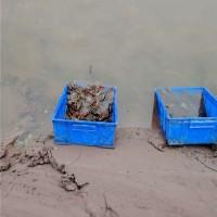 葫芦岛小龙虾青红种苗供应价格 葫芦岛小龙虾青红种苗繁育基地