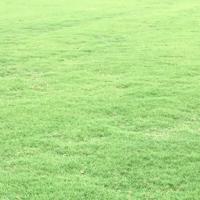 江苏百慕大草坪价格,句容绿化草坪基地