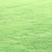 江苏句容别墅绿化草坪批发价格 句容别墅绿化草坪基地
