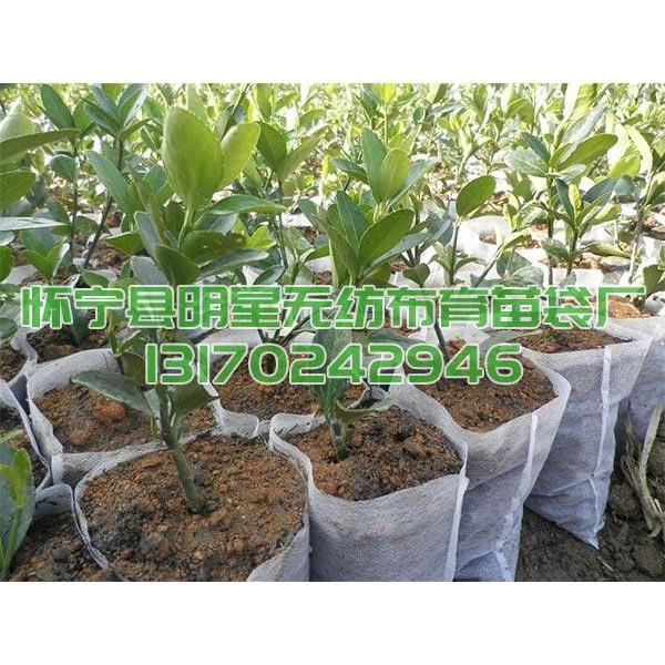 供应可降解无纺布育苗营养袋加厚布料制作