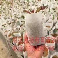 厂价直销透气自吸水成活率高无纺布育苗营养袋