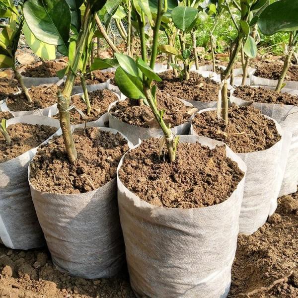 厂价直销育苗营养袋无纺布育苗袋透气自吸水成活率高