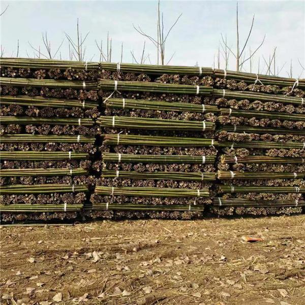 綠化支撐竹桿供應廠家 綠化支撐竹桿批發價格