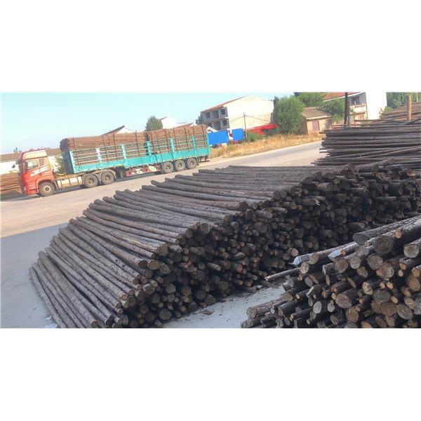 園林植樹杉木桿供應廠家 園林植樹杉木桿批發價格