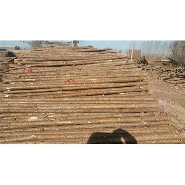 園林植樹杉木桿批發價格 園林植樹杉木桿供應廠家