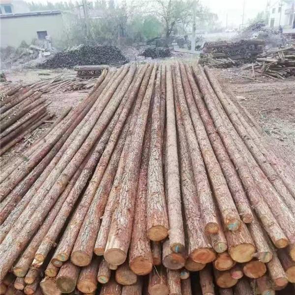 綠化杉木桿供應廠家 綠化杉木桿批發價格
