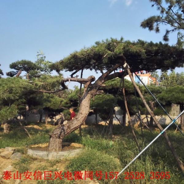 苗木種植銷售