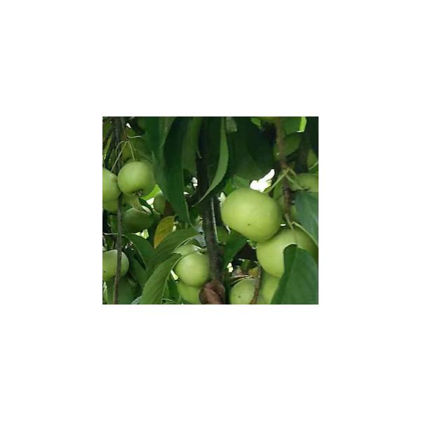 柳州市長塘鎮山楂果園轉讓