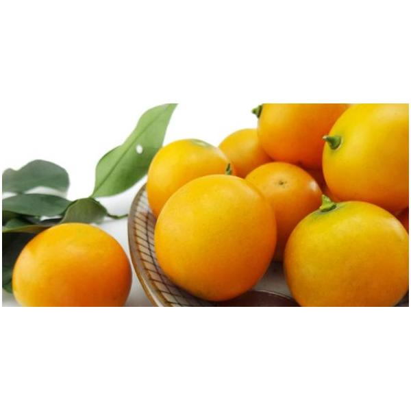 玉林供應脆蜜金桔樹苗|玉林脆蜜金桔樹苗一般哪里有買