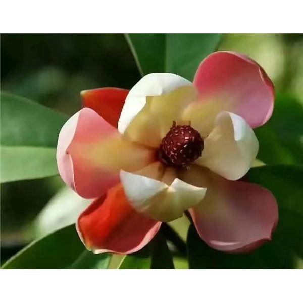 珍稀植物种苗育苗基地,大型珍稀种苗培育种植