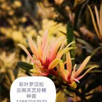 珍稀种苗育苗基地,大型珍稀植物种子培育种植