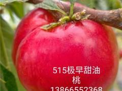 富藤1號接穗多少錢一根枝條,哪里有早熟桃苗