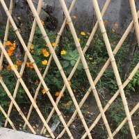 竹篱笆护栏