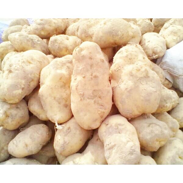 土豆批发神池土豆晋薯16号4两起步个大皮薄营养丰富