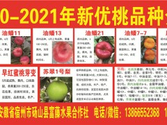 黄金蜜0号桃苗:刚刚培育成功的极早熟黄肉桃新品种