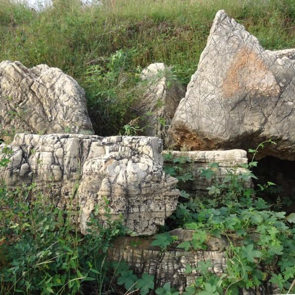蒙山黑石龜紋石草坪石綠化石