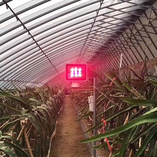 火龙果专用补光灯价格 植物补光灯厂家